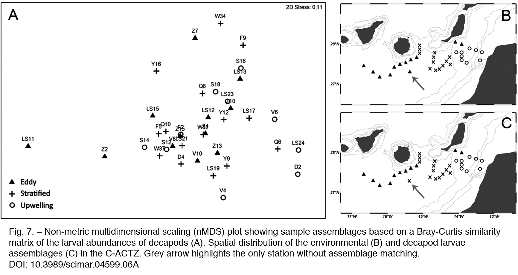 Transport pathways of decapod larvae under intense mesoscale